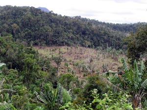 Area illegally cleared within Marojejy NP, Oct. 2005