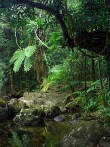 Marojejy's virgin rainforest